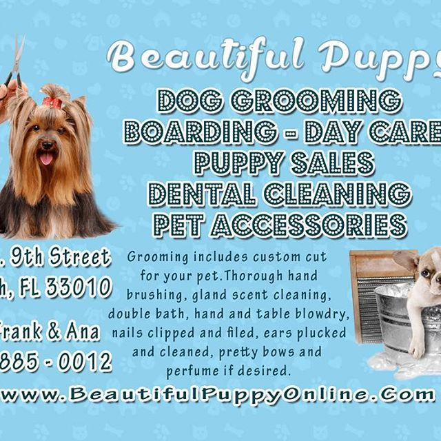 Beautiful Puppy, INC. - Hialeah Establishment