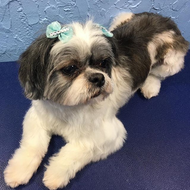 Beautiful Puppy, INC. - Hialeah Informative