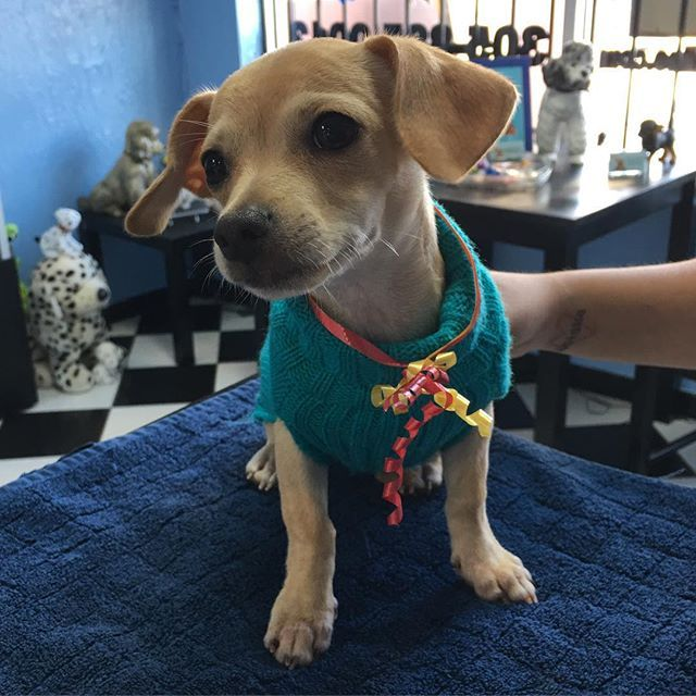 Beautiful Puppy, INC. - Hialeah Reasonably