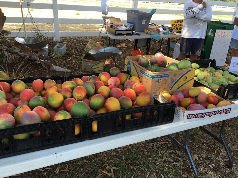 Nick's Island Tropical Fruit - Merritt Island Wheelchairs