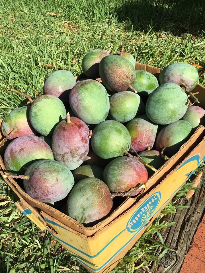 Nick's Island Tropical Fruit - Merritt Island Informative