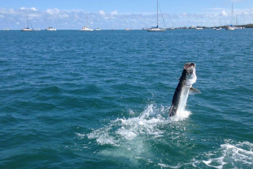 Tarpon Diem - Key West Webpagedepot