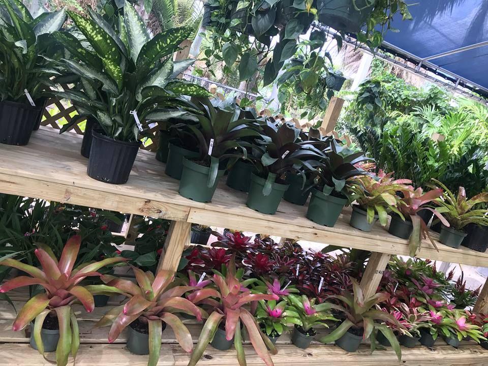 Piri Nursery & Landscaping - Hialeah Contemporary