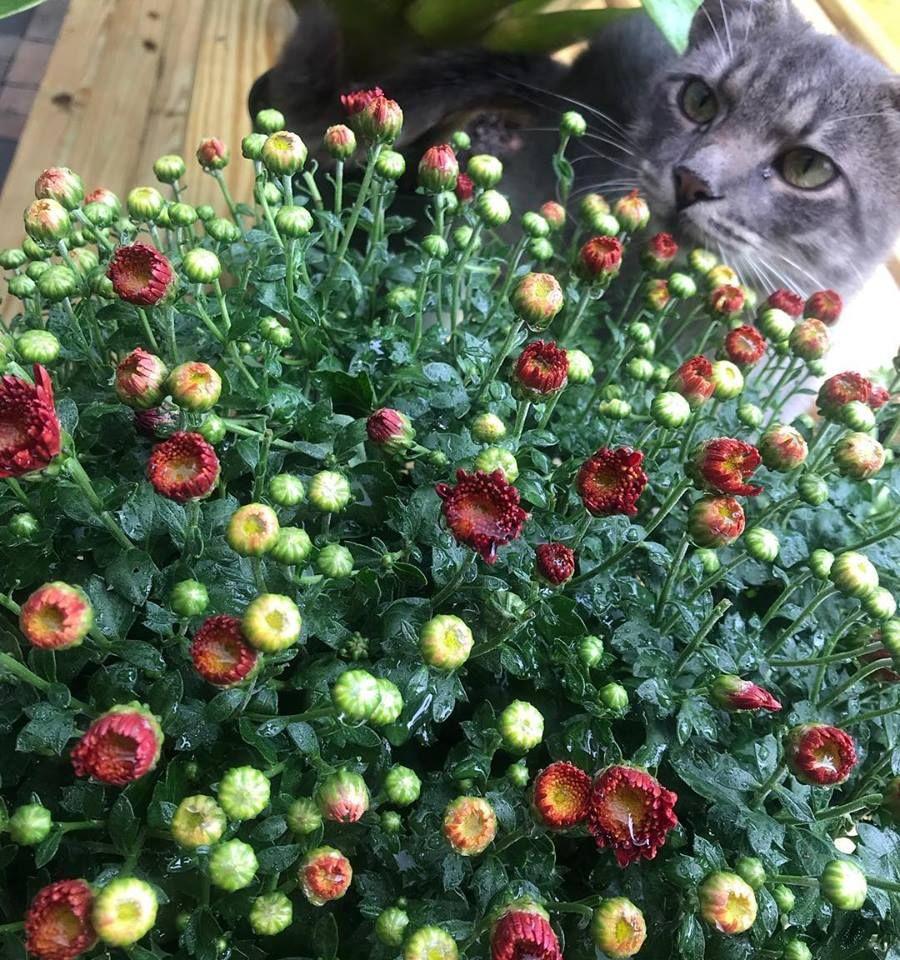 Piri Nursery & Landscaping - Hialeah Convenience
