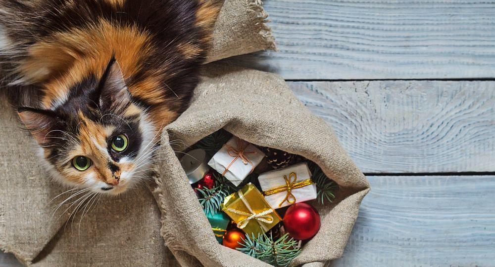 Pet Supermarket - Key West Webpagedepot