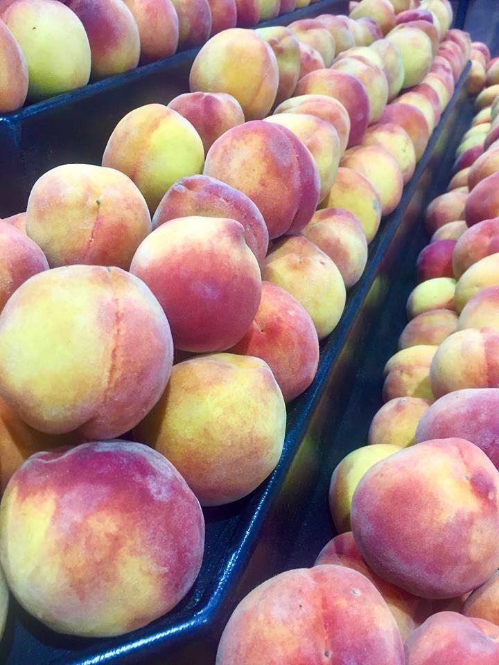 Sun Harvest Citrus - Fort Myers Webpagedepot