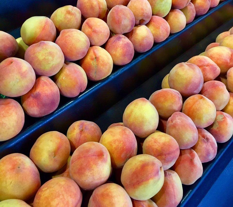 Sun Harvest Citrus - Fort Myers Informative