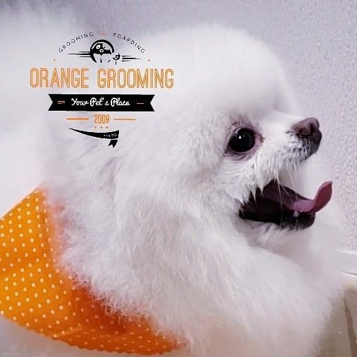 Orange Grooming - Miami Appointment