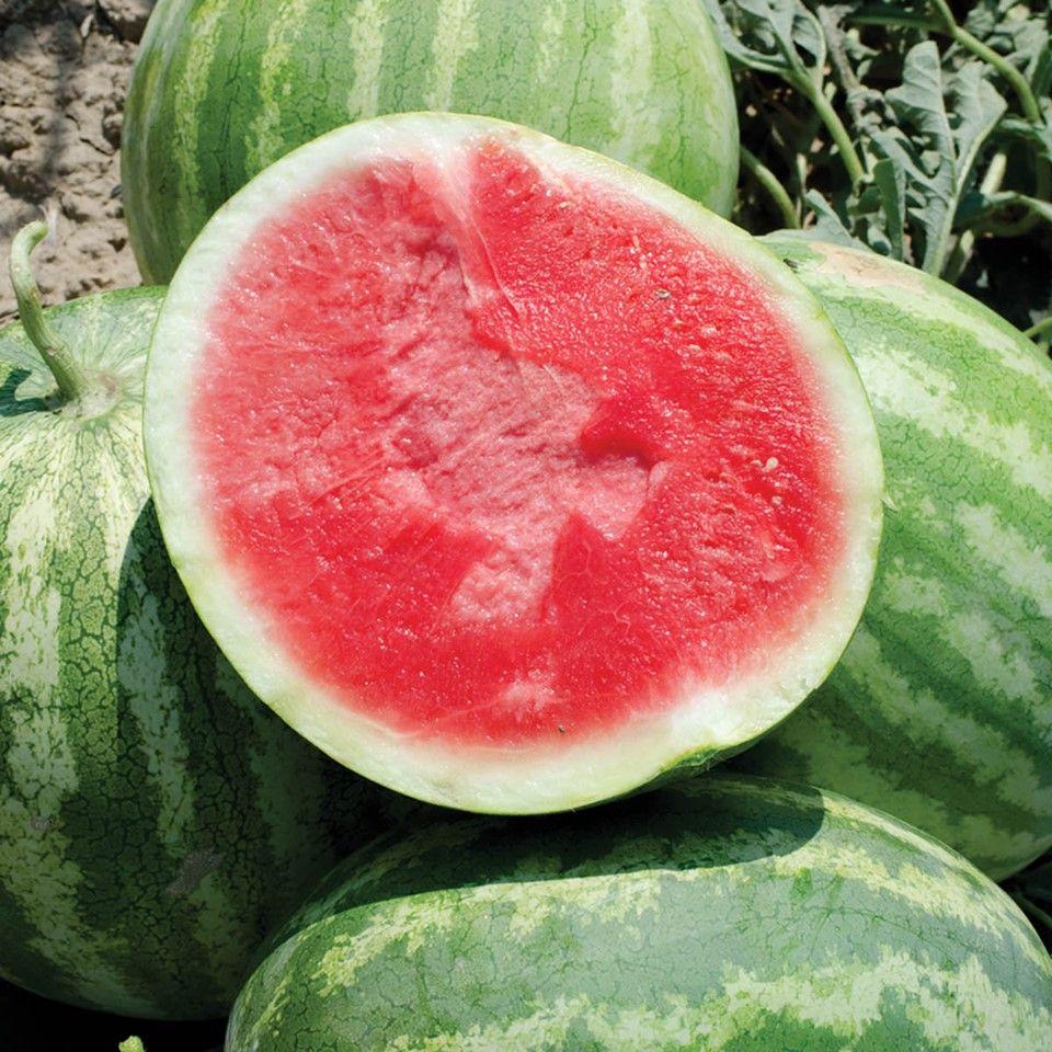 Bedner's Farm Fresh Market - Boynton Beach Thumbnails