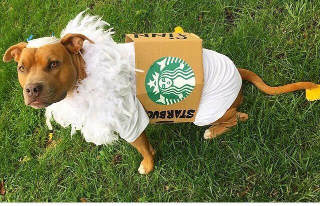 Starbucks -The Bronx Establishment