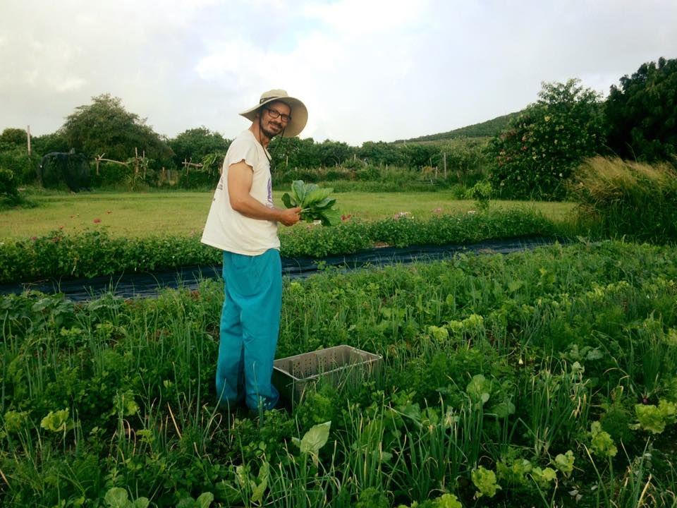 ARTfarm - St. Croix Photographer
