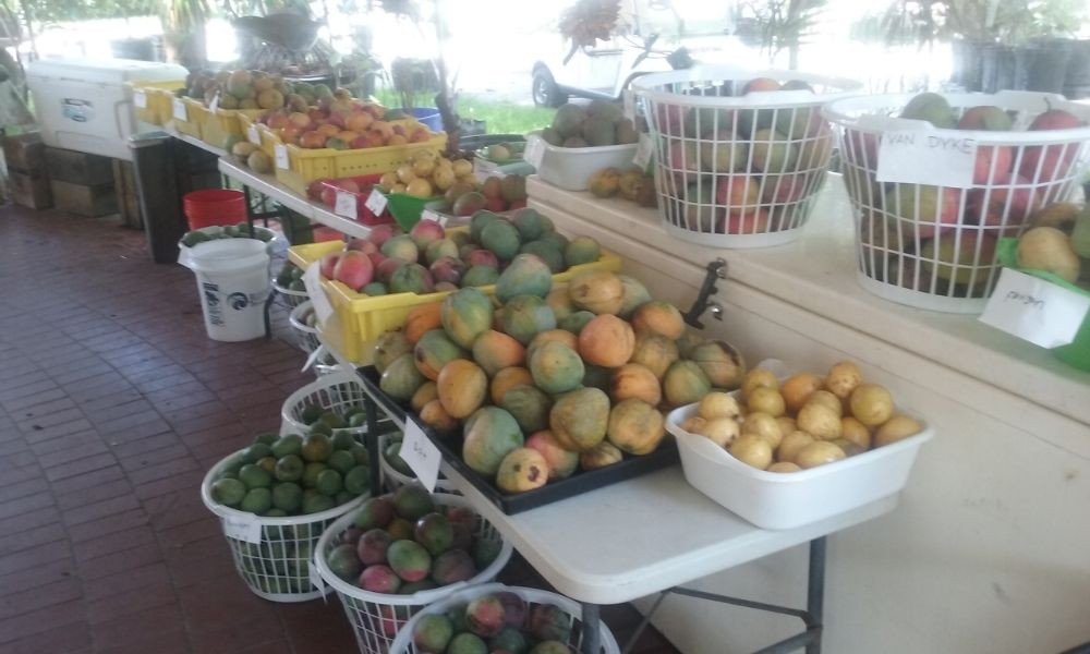 Excalibur Fruit Trees - Lake Worth Information