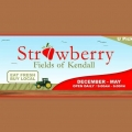 Strawberry Fields of Kendall - Miami, Strawberry Fields of Kendall - Miami, Strawberry Fields of Kendall - Miami, 9443 SW 137th Ave, Miami, FL 33186, USA, Miami, FL, , Fruit store, Retail - Fruit, citrus, vegetables, fruit, juice, , shopping, Shopping, Stores, Store, Retail Construction Supply, Retail Party, Retail Food
