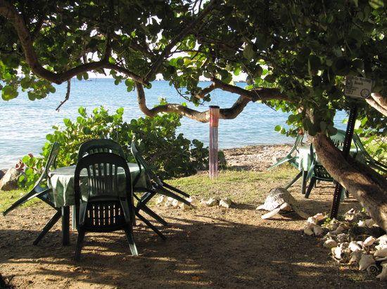 Turtle's Deli - St Croix Information
