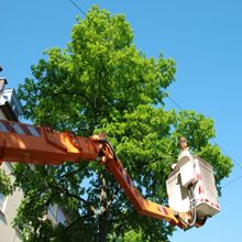 H & H Tree Services Inc. Appointments