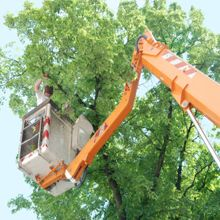 H & H Tree Services Inc. Informative