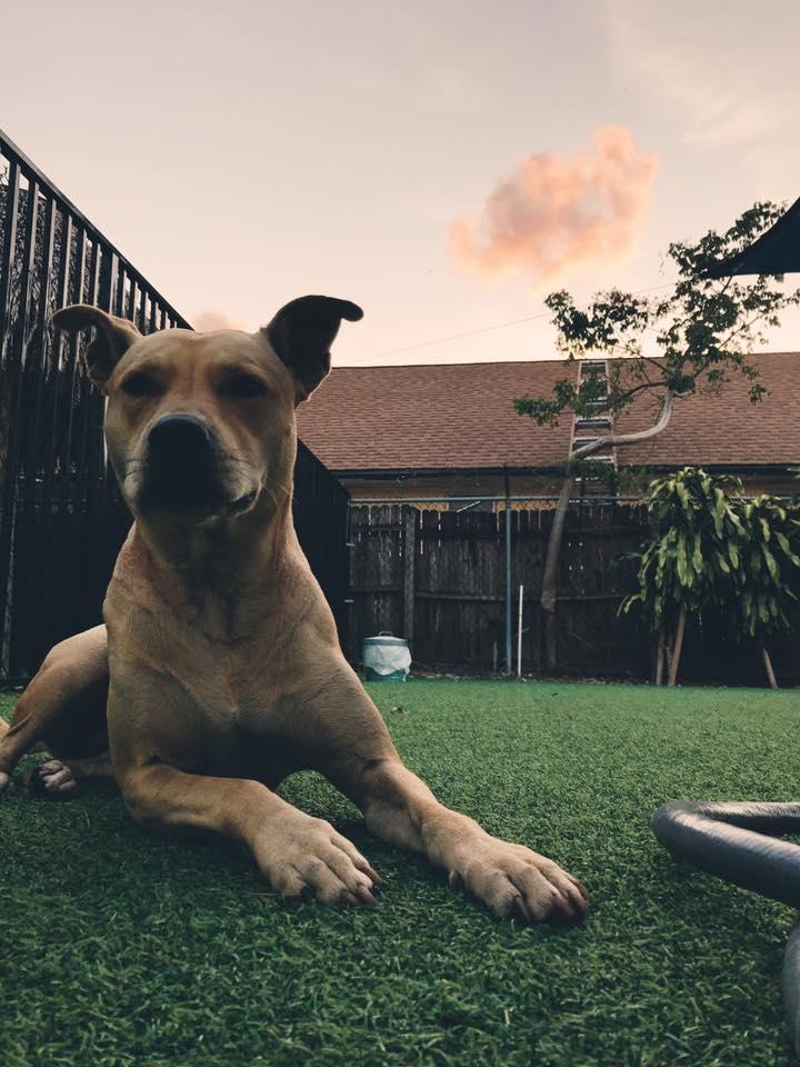 Darbster Dog Daycare - Boca Raton Slider 5