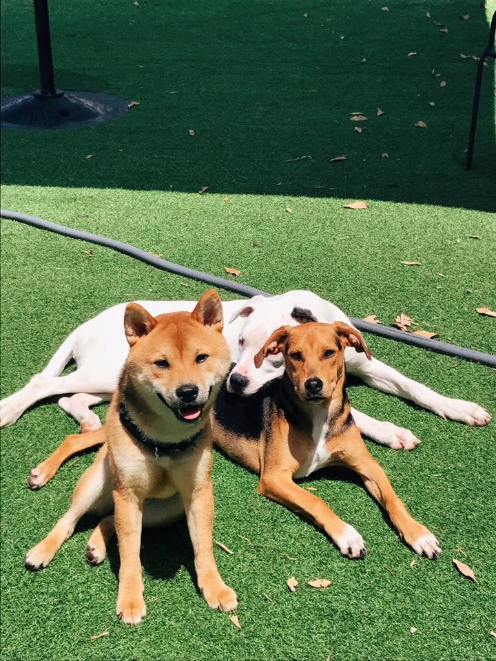 Darbster Dog Daycare - Boca Raton Slider 4
