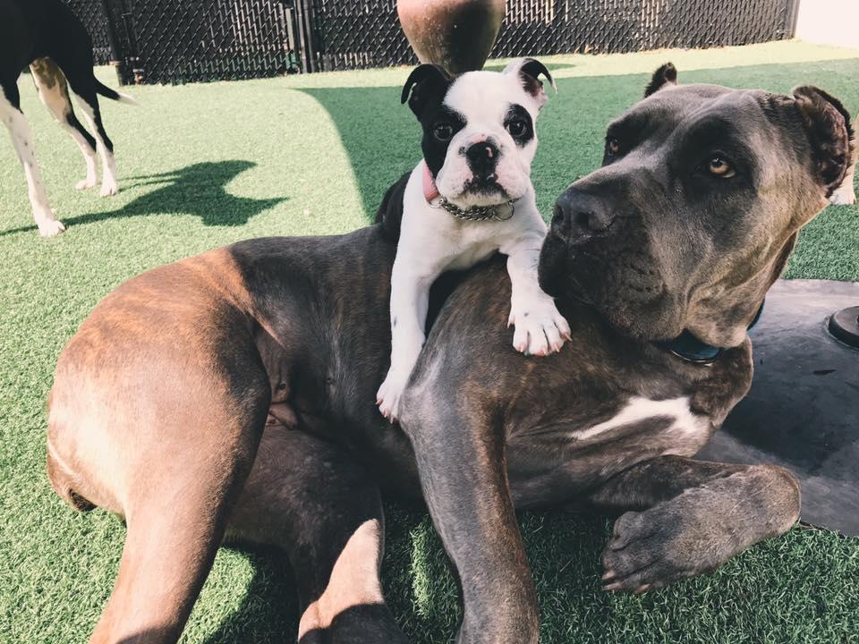 Darbster Dog Daycare - Boca Raton Slider 3