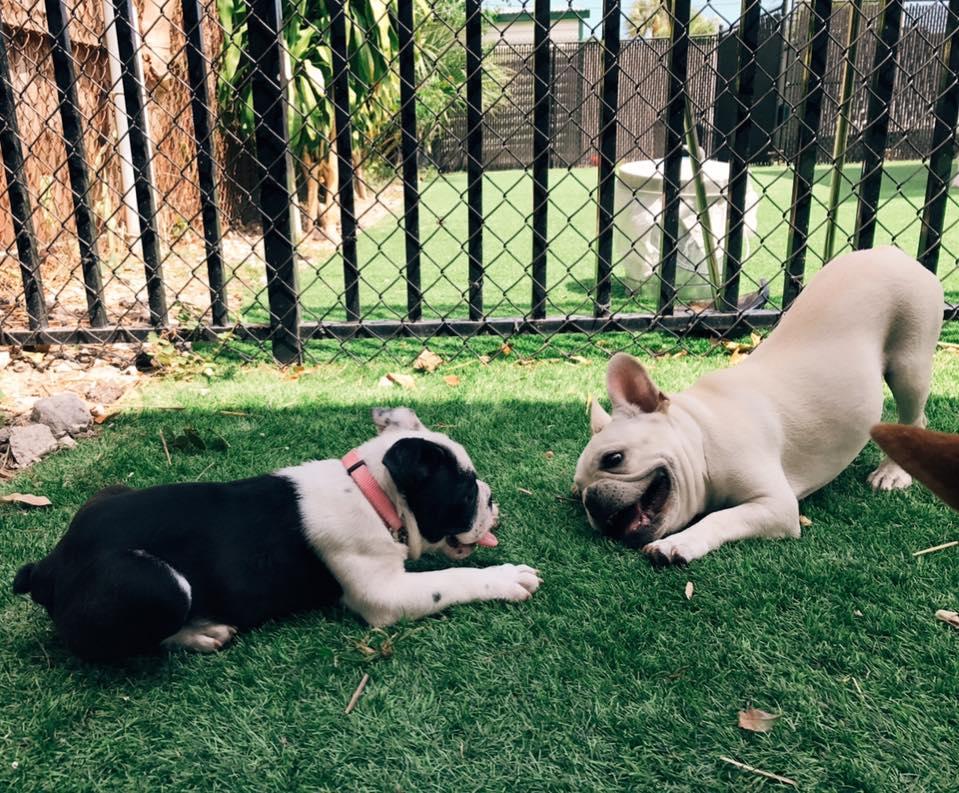 Darbster Dog Daycare - Boca Raton Slider 1