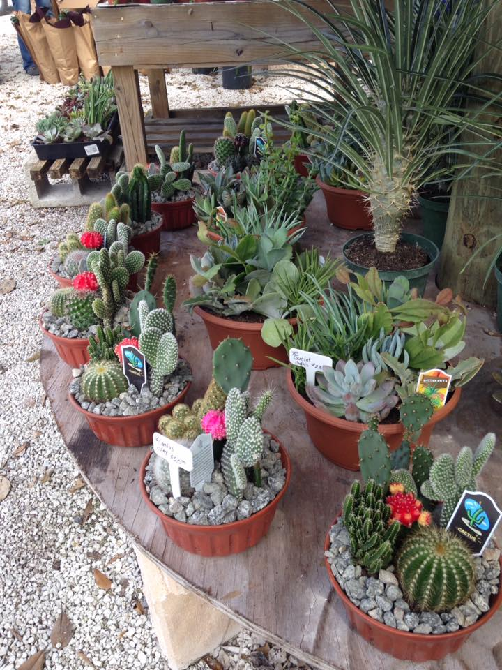 Delray Garden Center - Delray Beach Webpagedepot