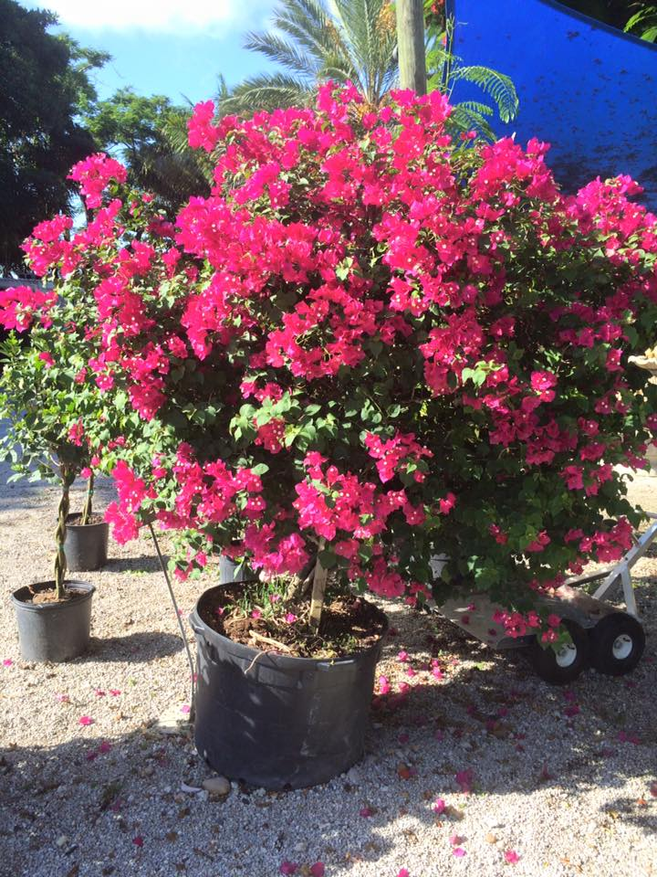Delray Garden Center - Delray Beach Cleanliness
