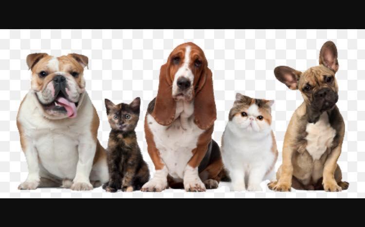 English Plaza Animal Hospital - Homestead 248-6536the