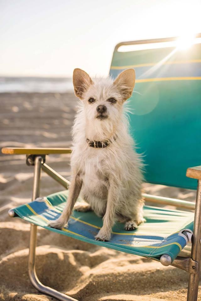 PetSmart - Boynton Beach Convenience