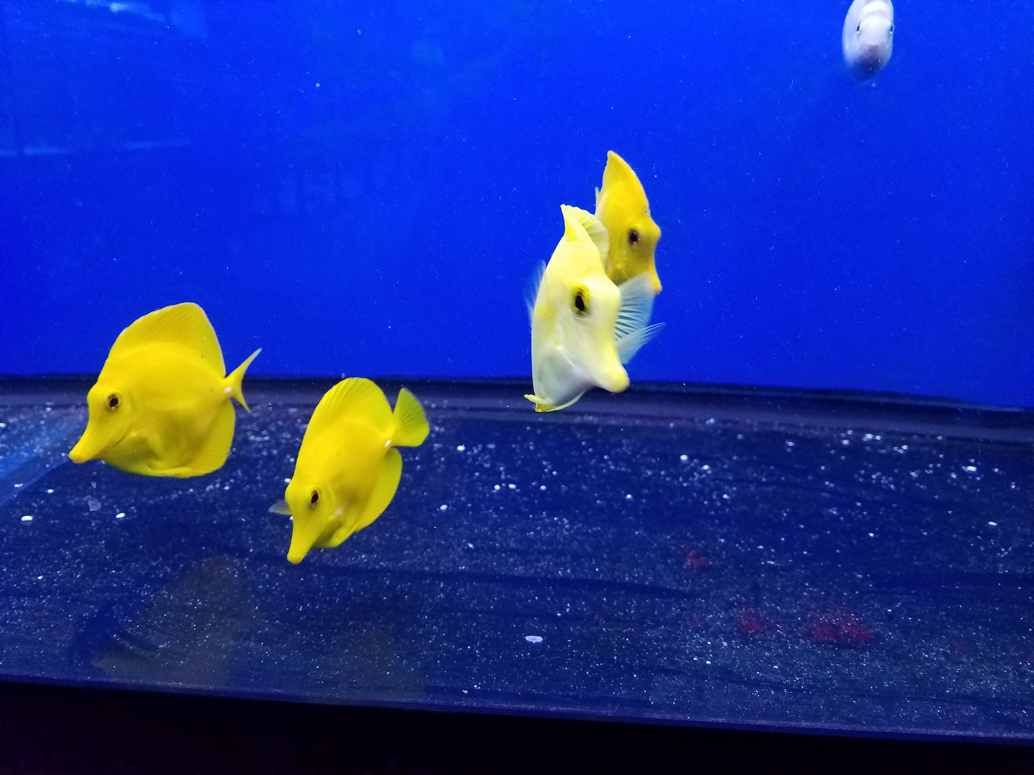 Tanks A Lot Aquariums - Lake Worth Information