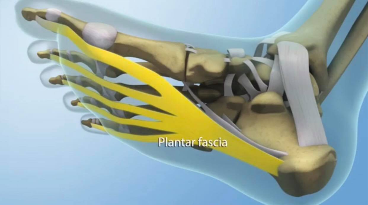Integrative Foot & Ankle DPM Reconstruction