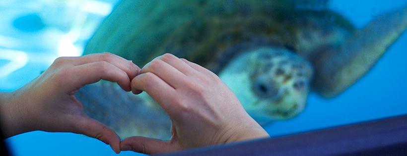 Loggerhead Marinelife Center natural habitat