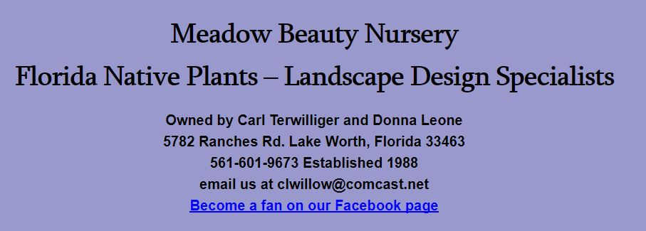 Meadow Beauty Nursery - Lake Worth Contemporary
