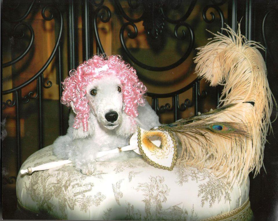 Wiggles Dog Wigs Accommodate