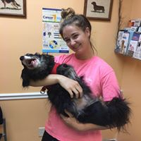 Best Friends Veterinary Hospital Themselves