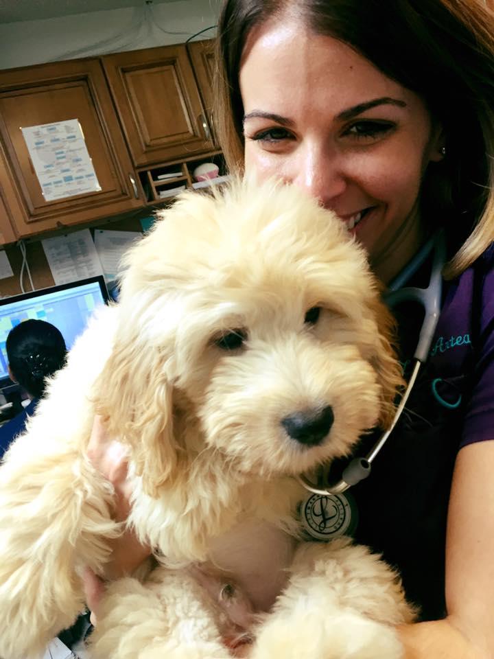 Clint Moore Animal Hospital - Boca Raton Organization