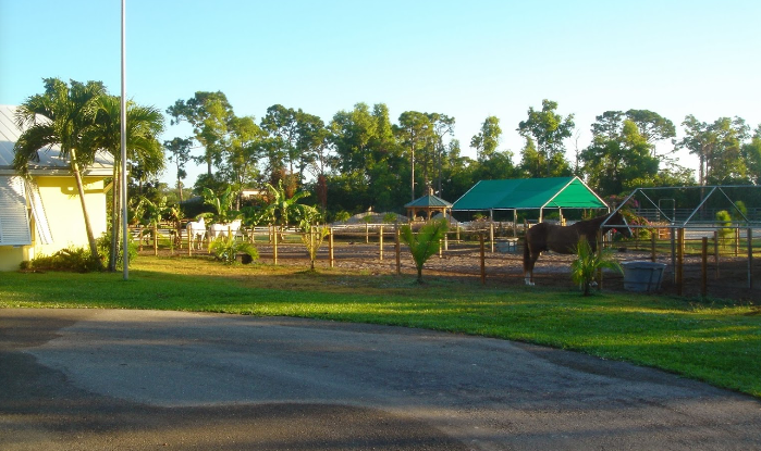 Johnsons Folly Horse Farm - Delray Beach Information