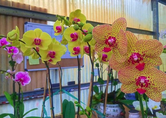 Green Barn Orchid Supplies - Delray Beach Information