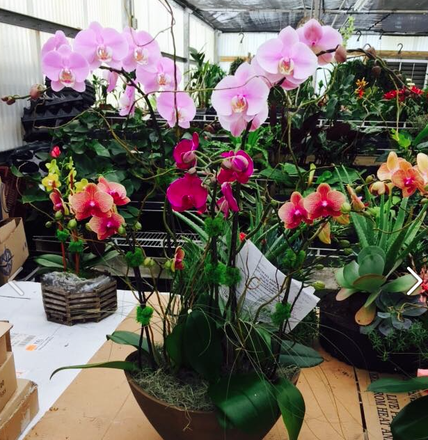 Green Barn Orchid Supplies - Delray Beach Accommodate