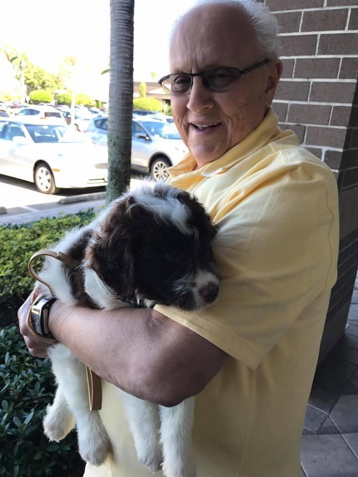 Palm Beach Puppies - Boca Raton Webpagedepot