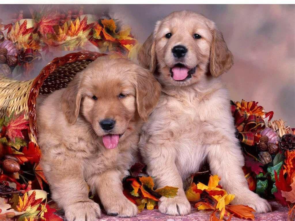 Palm Beach Puppies - Boca Raton Information