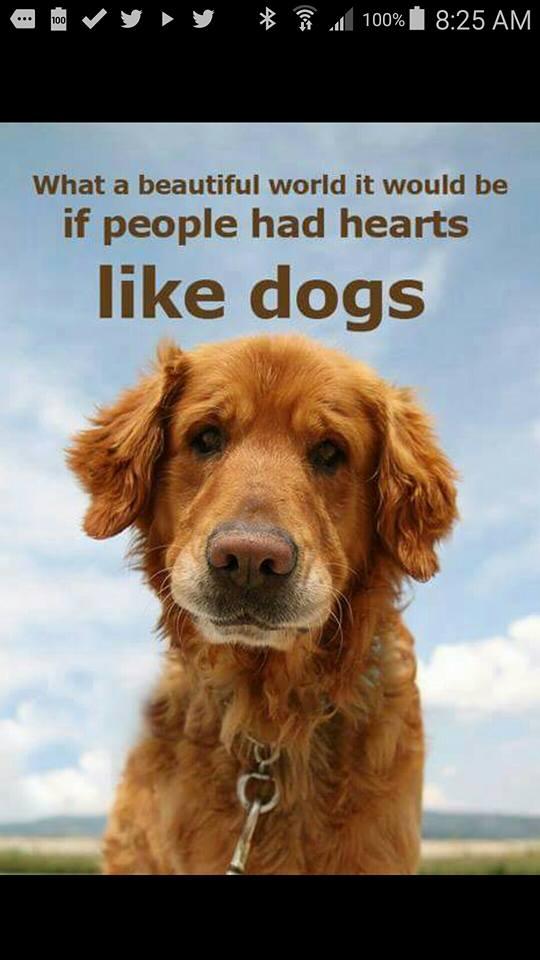 Palm Beach Puppies - Boca Raton Informative