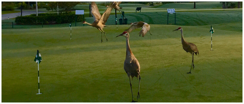 Sandhill Crane Golf Club - Palm Beach Gardens Individual