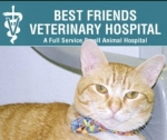 Best Friends Veterinary Hospital - Lake Worth Best Friends Veterinary Hospital - Lake Worth, Best Friends Veterinary Hospital - Lake Worth, 4949 South Congress Avenue, Lake Worth, Florida, Palm Beach County, Veterinarian, Medical - Veterinary, animal care, pet care, , cat, dog, kitten, rat, mice, snake, horse, pig, animal, disease, sick, heal, test, biopsy, cancer, diabetes, wound, broken, bones, organs, foot, back, eye, ear nose throat, pancreas, teeth