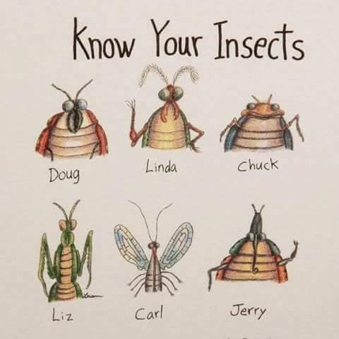 Tropical Pest Management - West Palm Beach Information