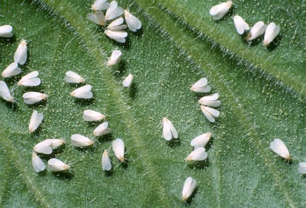Tropical Pest Management - West Palm Beach Extermination
