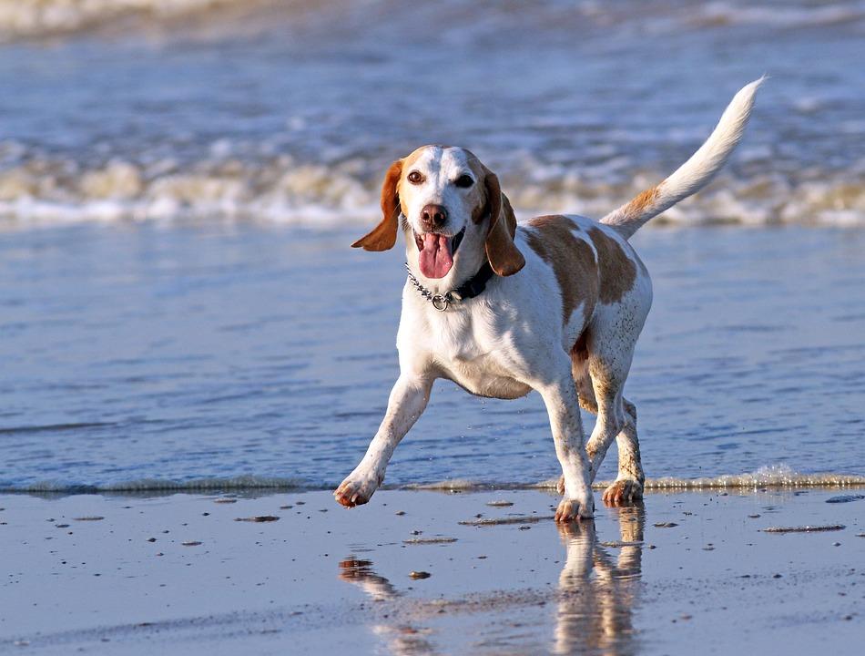 5 Paw Pets - Riviera Beach Information