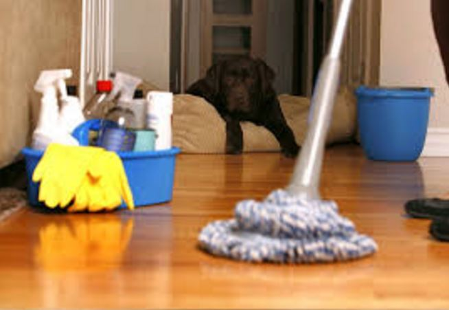 Organic Cleaning Service, INC - West Palm Beach Professional