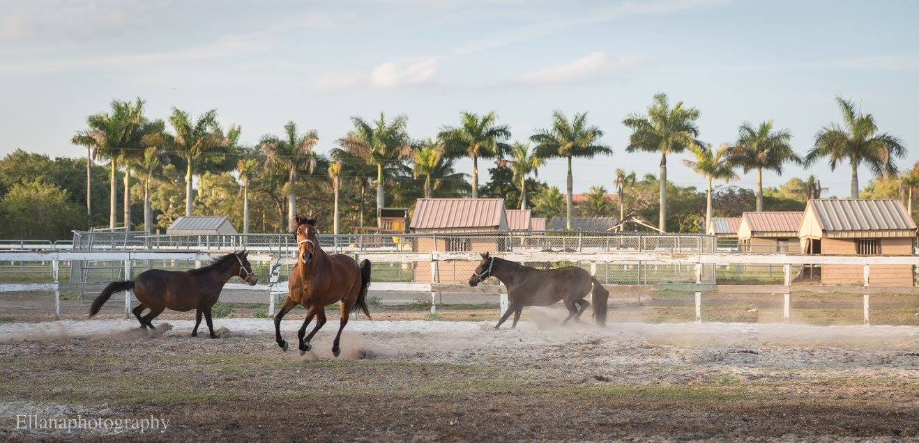 Escudero Paso Fino Riding School - Miami Positively