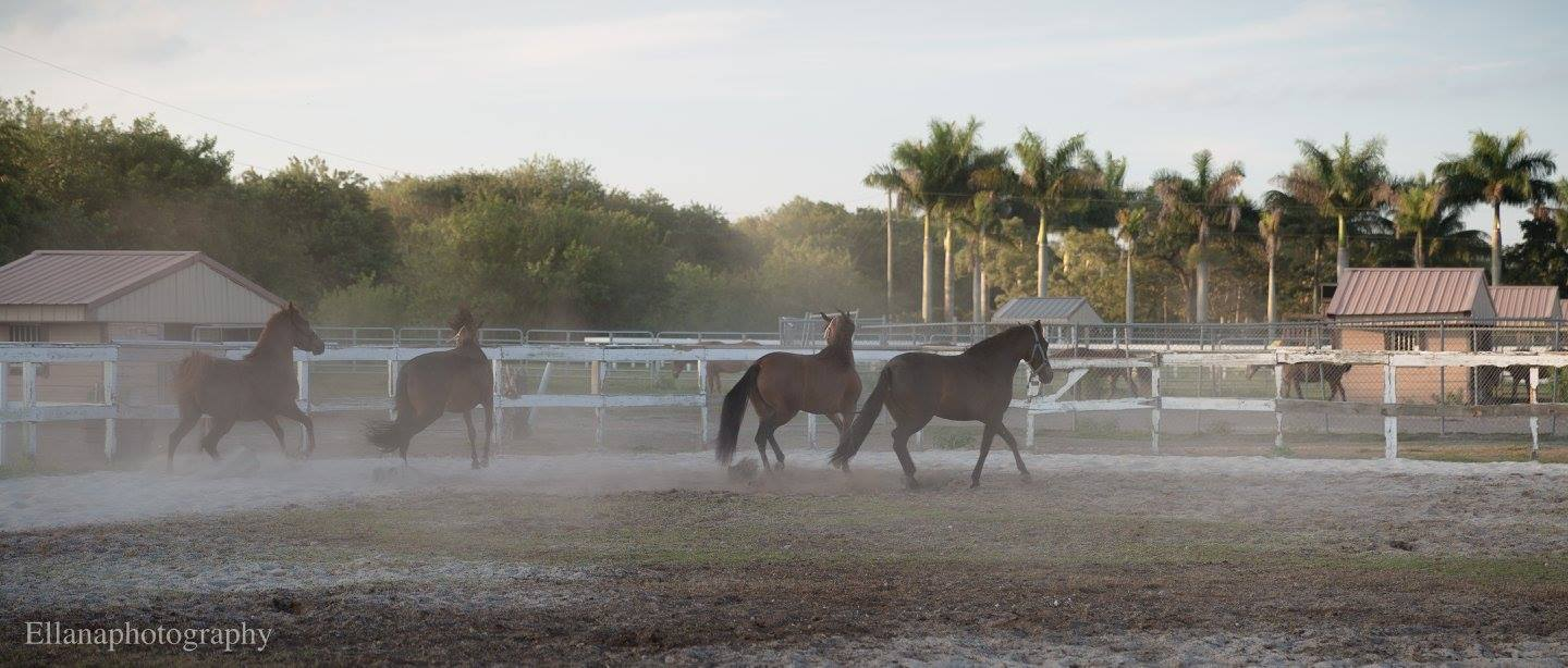Escudero Paso Fino Riding School - Miami Informative