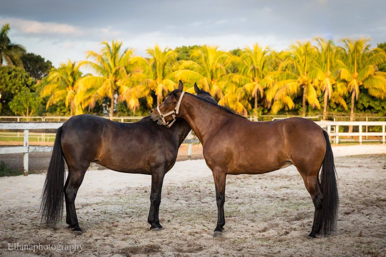 Escudero Paso Fino Riding School - Miami Information